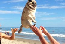 Poor scared pugs