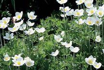 Hardy Plants / by Alexa Callison-Burch