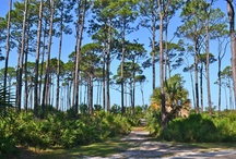 St. Joseph Peninsula State Park, Cape San Blas, Florida