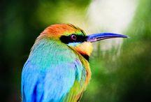 Birds / by Robyn Jochum