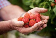 Fraises / Envie de fraises ? N'hésitez pas à vous promener parmi toutes ces recettes, vous vous régalerez.