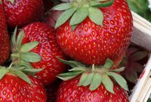 growing fruits