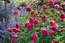 Rosehave