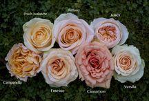 Roses, Flowers & Foliage