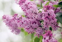 flowers / by Linda Savoca
