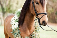 Pets in Weddings / We love our pets and we know you do too! So why not include them in your wedding?