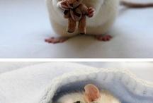 Мышь*