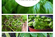 Veggies herbs