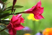 Summer colors Kesän värejä / Kesäisiä kuvia pihalta ja puutarhasta