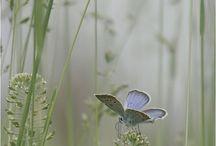 Farfalle / Farfalle