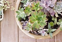 Keeping Your Plants Alive.. / Simple Tips, Tricks & Advice for Maintaining Your Plants- no green-thumb needed