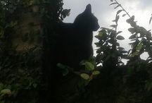 2 gatos / Gatão no muro!