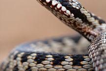 Reptiles - Reptielen