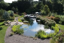 Our Show Pool - as seen on TV! / Visit our Show Pool June, July September Fridays 1-5pm Ellicar Gardens