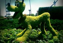 Topiary & Flower Topiary / Plant Shaping & Flower shapes