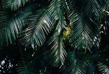 Green/plants