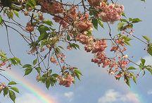 flowerrrssss