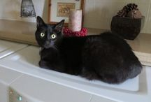 Black Cats / Photos of Ernie...and things that make black cats so special