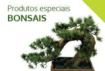 fit e plantas