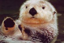 Otters are Awesome / by Nyla Parker