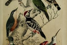 Birds Vintage Illustrations