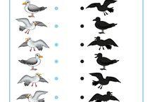 kleuters vogels