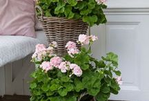 Blommor & planteringar