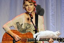 Talr swift and cat's
