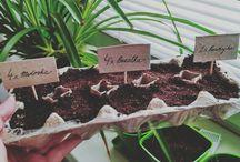 Eco DIY garden