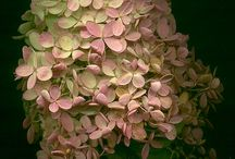 Blooming Fall