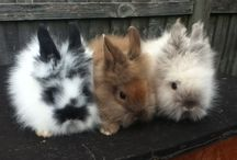 Bunnies just like ours!!!