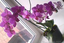 комнотные цветы