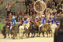 Salon du cheval de Paris 2013 / BEST OF Démonstrations Disciplines -  Démonstrations de toutes les disciplines avec des cavaliers de haut niveau au Salon du Cheval de Paris & animations du stand