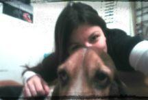 Basset hound!!! / Basset hound dog