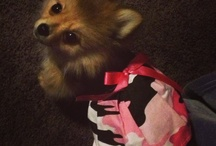 cute animal dress