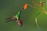 Colorful Aviators / by ♥ Gloria Brown ♥