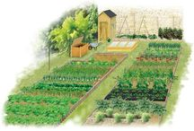 Mon jardin / Potager