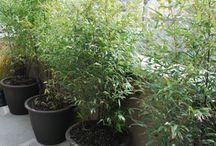 Bambus Topf