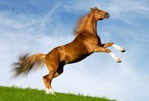 A-Critters-Horses / by Charlene Fulghum