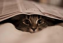 cat / by Nejat Yentürk