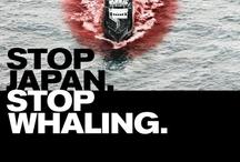 Sea Shepard / Sauvons nos Océans!!