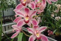 Orchideák..