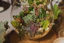 Ecosystem / by Kyrie Estes