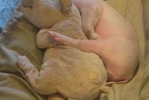 pigs / by Chimwemwe M