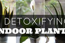 Gardening and indoor plants