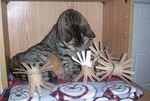 jouet chat