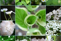 bílá zahrada