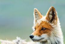 Animals (PHOTOS)