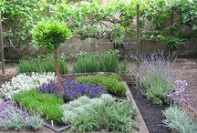 Gardening / by Debbie Laser