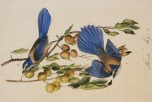 Inspiration   Antique Natural History Prints